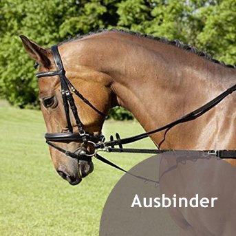 Pferd mit Ausbinder auf grüner Wiese