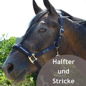 Pferd mit Halfter im Grünen