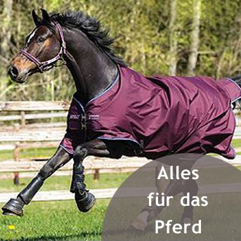 Pferd galoppiert auf Weide mit Schabracke